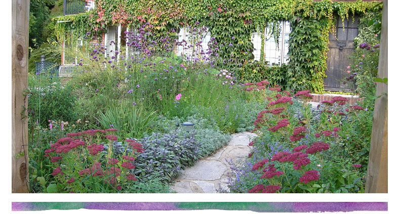 prior to the redesign the attractive york stone path existed but the planting either side of it consisted of various overgrown and mismatched shrubs - Garden Design Cottage Style